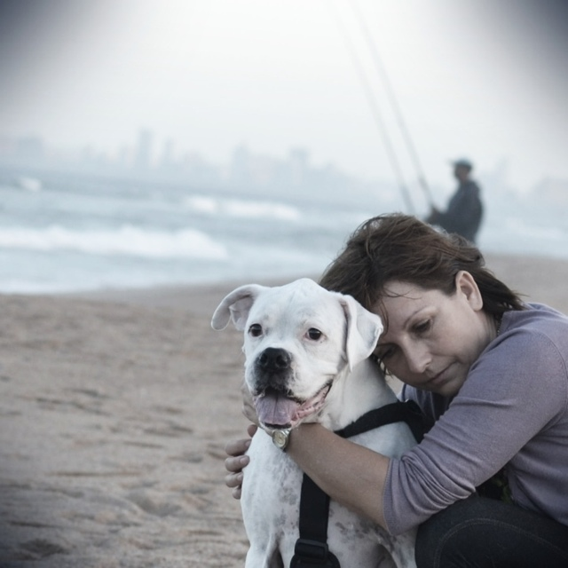 White boxer dog beach