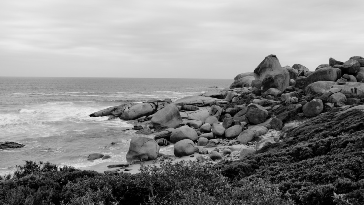 Western Cape, black and white