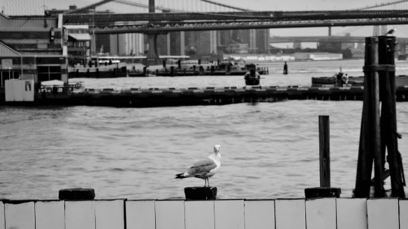 New York City Manhattan Seagull Governor's Island Ferry