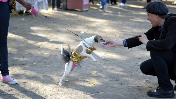 Tompkins Square Park Halloween Dog Parade NYC